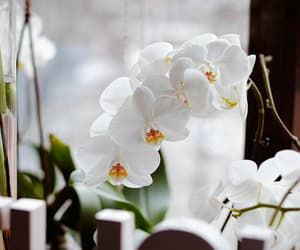 flower orchids white and beautiful lovely nature image