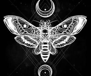 tattoo, moth, and art image