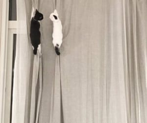white & black kitten, kittens being assholes, and black & white kitten image