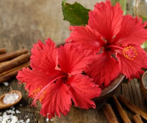 health and hibiscus oil image