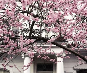 aesthetic, architecture, and blossoms image