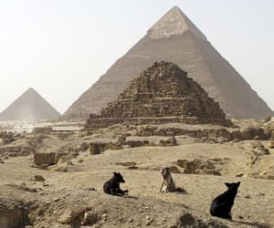 pyramids, egypt, and dogs image
