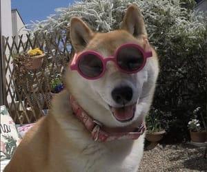 animal, dog, and lol image