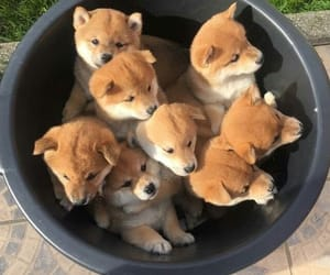 animal, puppies, and baby image