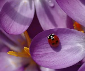 flowers, nature, and cute image