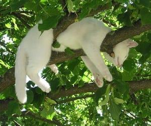 cat, tree, and animal image