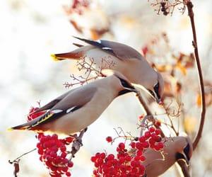 bird, photography, and linus englund image