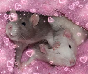 hearts, soft, and rats image