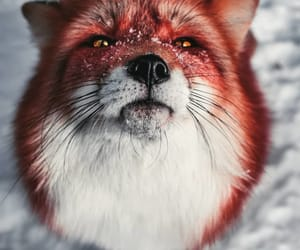 fox, winter, and forest charm image