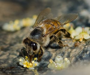 bees and nature image