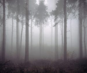 foggy, forest, and pale image