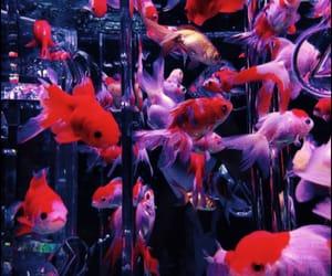aesthetic, aquarium, and colors image