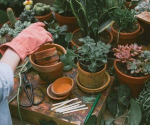 plants, nature, and girl image