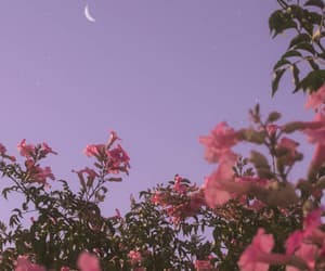 background, color, and flowers image