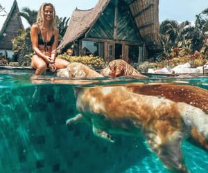 dog, golden retriever, and summer image