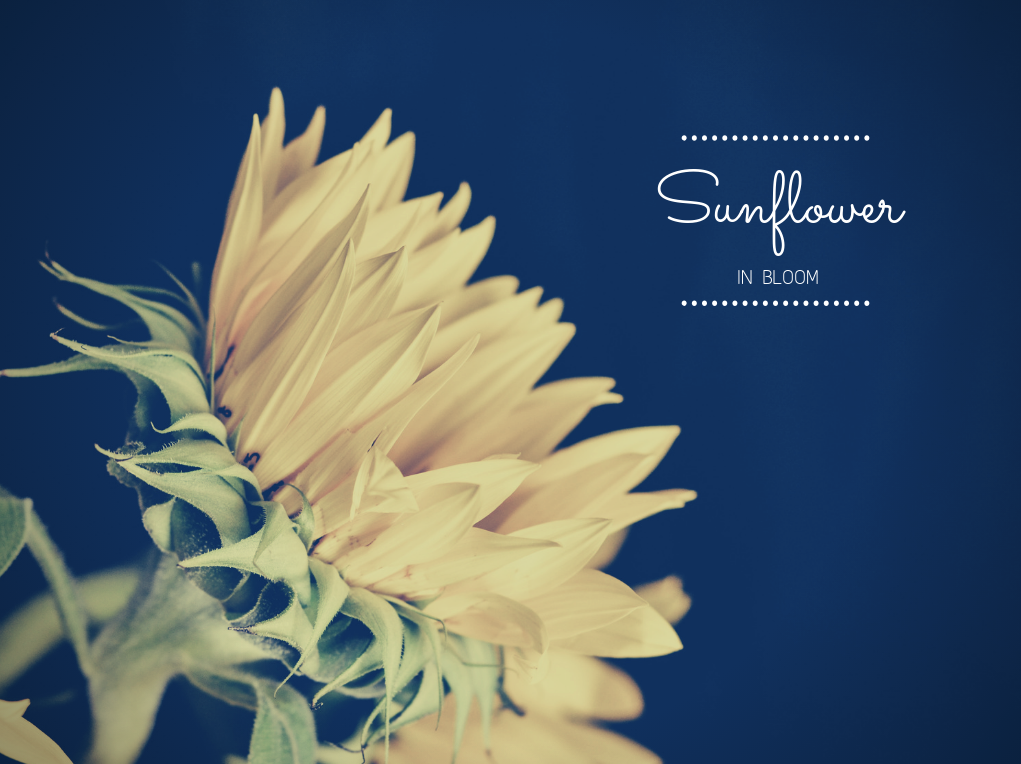 flower, photography, and spring image