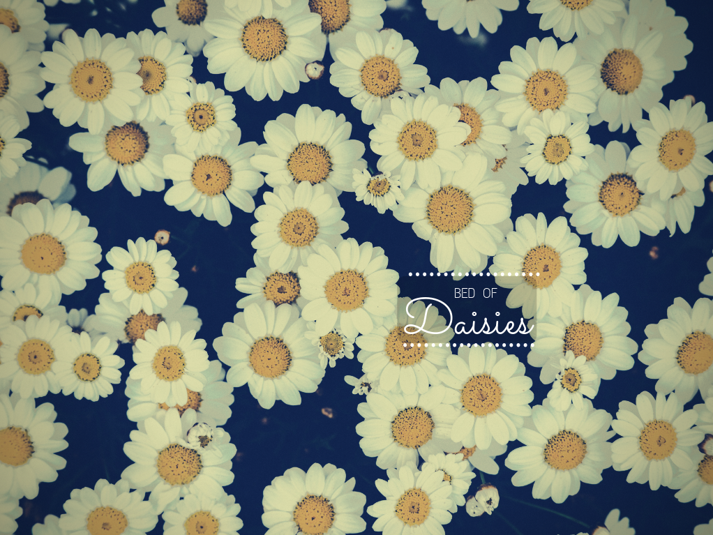 daisies, daisy, and spring image