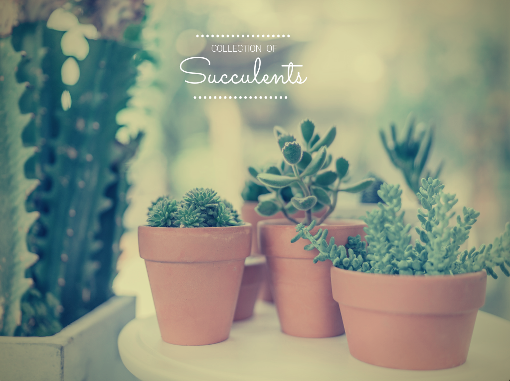 cactus, plants, and succulents image