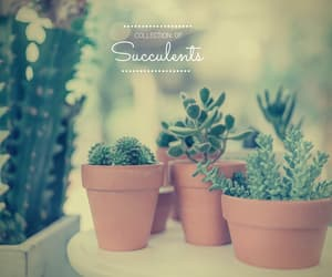 cactus, nature, and succulent image
