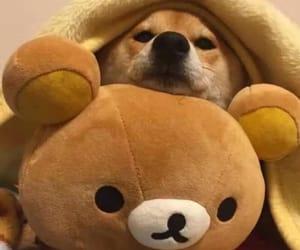 bear, dog, and teddy image