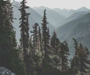 nature, tree, and forest image