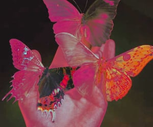 butterfly, aesthetic, and pink image