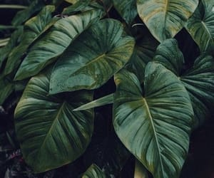 green, nature, and theme image
