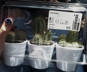 cactus, carefree, and aesthetic image