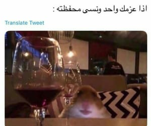 funny, تحشيش عراقي, and iraq image
