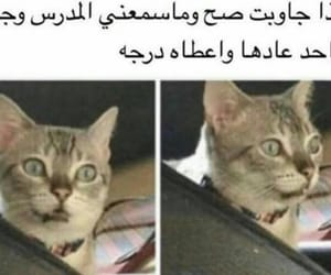 cat, funny, and ﻋﺮﺑﻲ image
