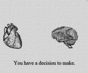 heart, brain, and decisions image