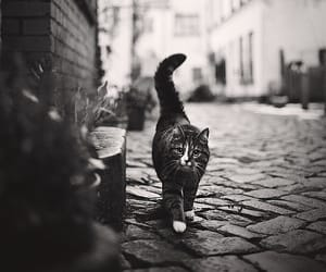 cat, black and white, and street image