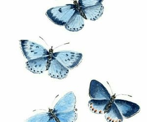 butterfly, blue, and wallpaper image