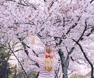 cherry blossom, photo, and photography image