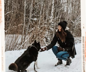 dogs, snowy, and winter image