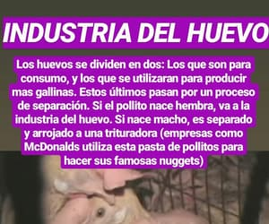 animal liberation, veggie, and especismo image