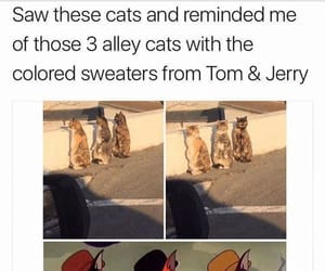 funny, tom and jerry, and cat image