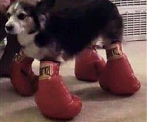 dog, angry meme, and dog meme image