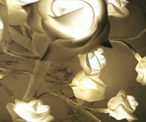 led, white rose, and rose image