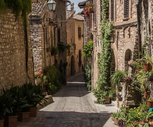 italy, plants, and travel image