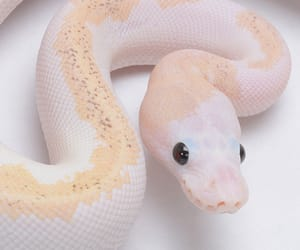 pale, snake, and cute image
