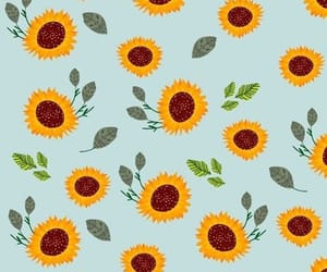sunflower, wallpaper, and wallpapers image