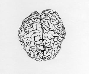 brain, aesthetic, and drawing image