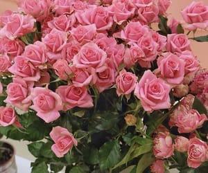flower, rose, and instagram image