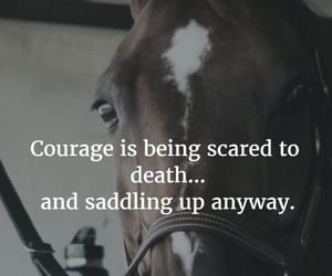 barn, stables, and horse quotes image