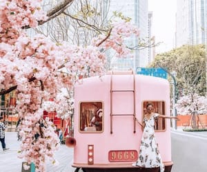 pink, flowers, and cherry blossom image