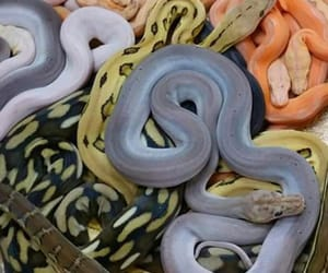 theme, rp, and snakes image