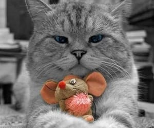 kitten, mouse, and cute image