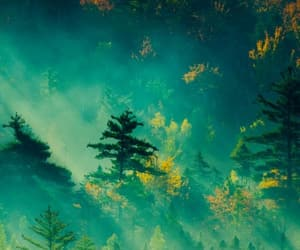green, wallpapers, and backgrounds image