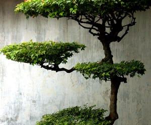 asia, bonsai, and china image